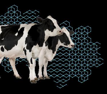 Sanbiotec - Pruebas genéticas para ganado