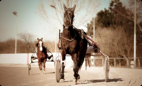 Sanbiotec - Analísis de pruebas genéticas para caballos de pura raza