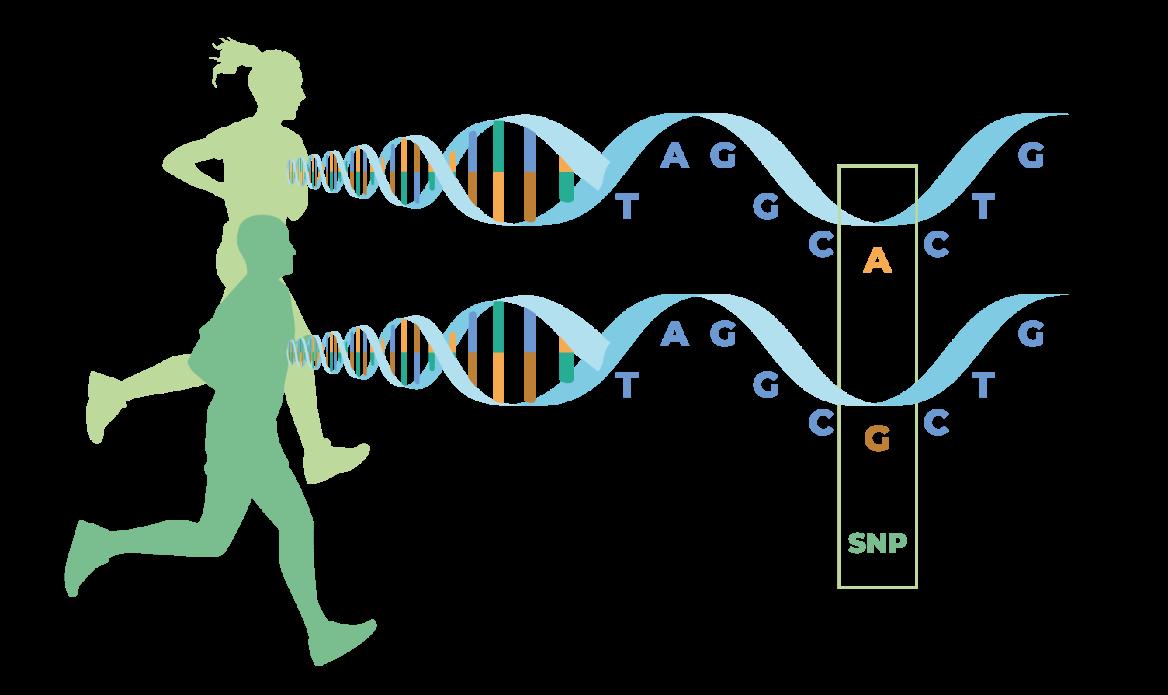 Sanbiotec - Pruebas genéticas a ganado